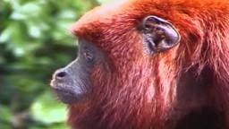 The Living Primates