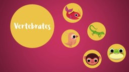Classifying Animals: Vertebrates