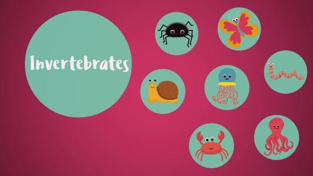 Classifying Animals: Invertebrates