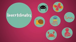 Classifying Animals: Invertebrates