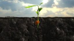 What a Seed Needs to Germinate