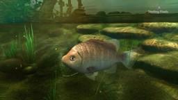 Adaptation to Aquatic Habitats