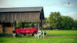 Aspects of Cattle Farming