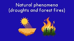 Natural Phenomena