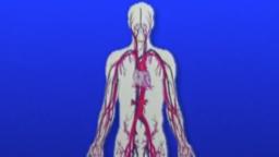 09. The Cardiovascular System