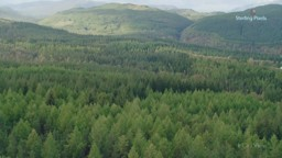 Protecting the Planet's Forests