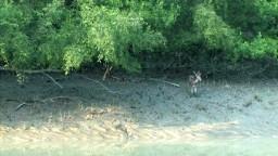Biodiversity Under Threat: The Sundarbans