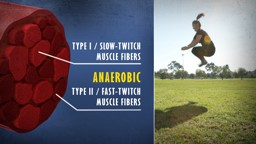 Chronic Muscular Adaptations