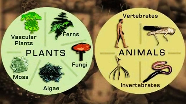 In Focus: Classifying Living Things - The How and Why of the Five Kingdom Classification