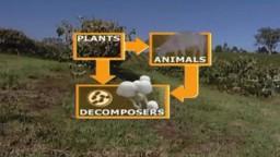 Biosphere Cycles (Senior)