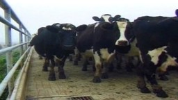 New Australian Food Technology: Our Dairy Industry