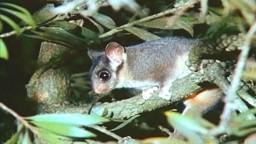 Australia's Threatened Plants and Animals