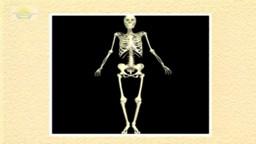 04. The Skeletal System
