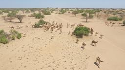 The Global Desertification Challenge