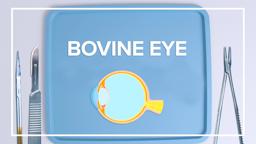 Bovine Eye